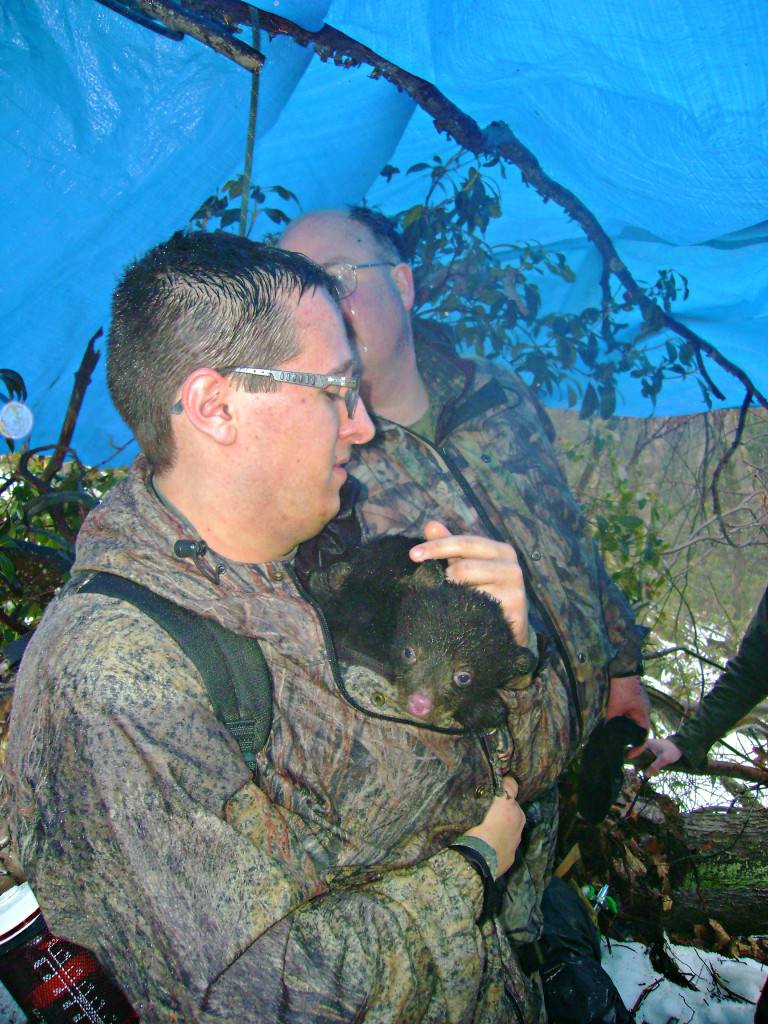 Cuddling and tagging the bear cubs, all in a day's work.
