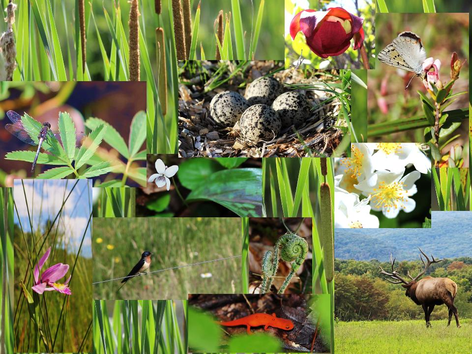 In Spring and summer, color can be found all over Pennsylvania, from tiny newts to woodland flowers