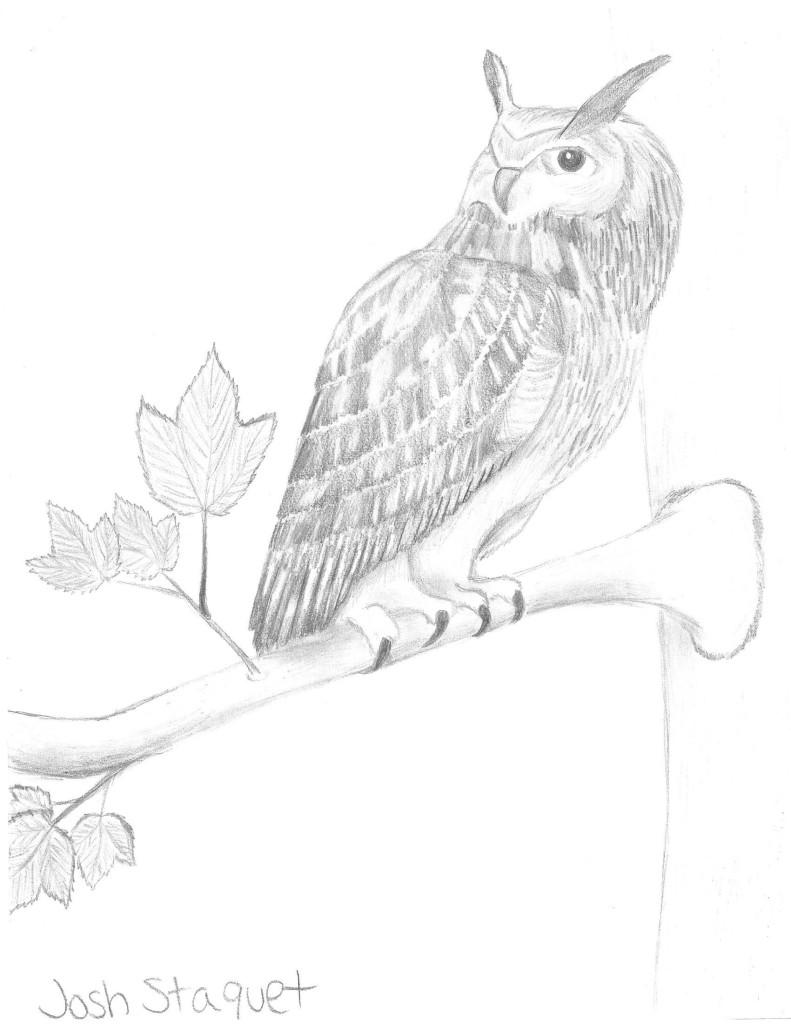 Josh Owl Sketch