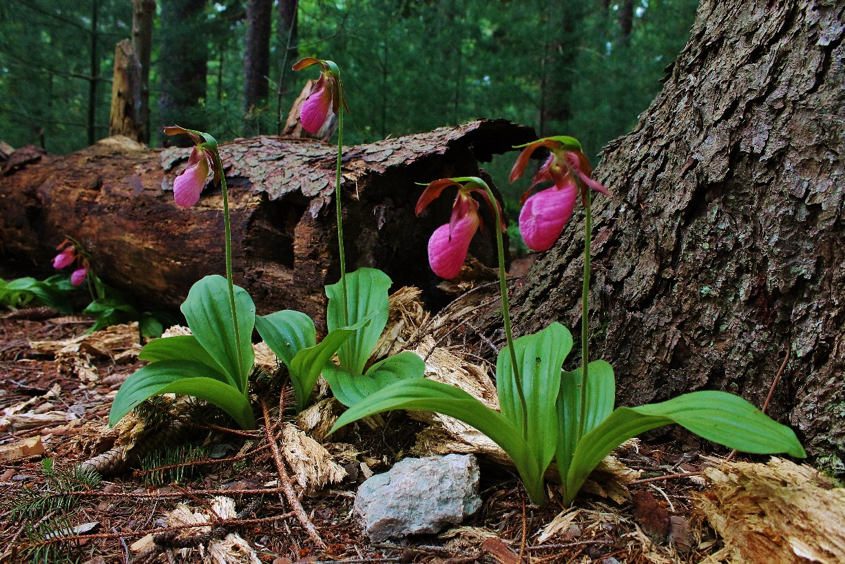 Lessons In The Lady Slippers Wildlife Leadership Academy