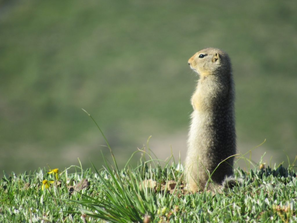Either we would be on the road or making stops, we would see a lot of wildlife including these ground squirrels.