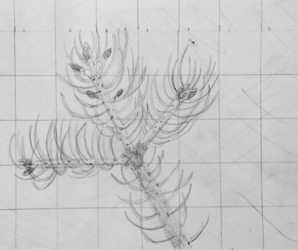 A sketch of a tree branch with pine needles on it. The bark texture is also sketched. There is a grid over the whole thing